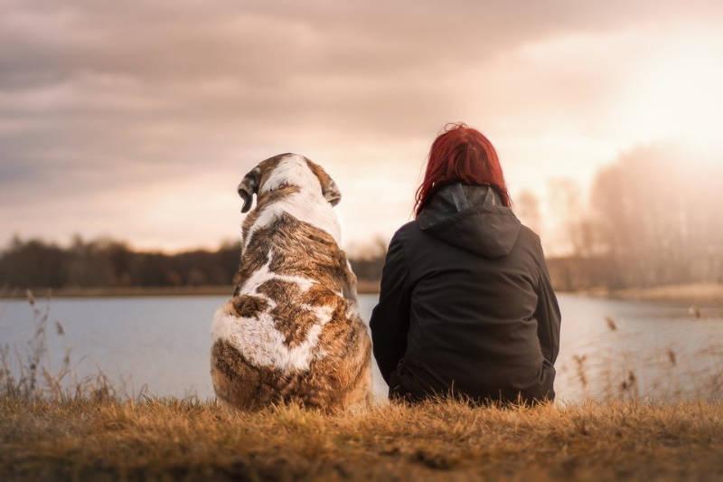 chien permet de vivre vieux